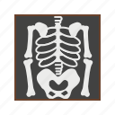 bones, medical, skeleton, skull icon
