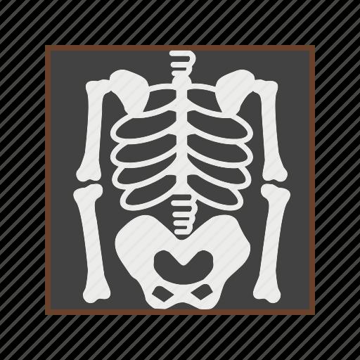 bones, medical, skeleton, skull icon