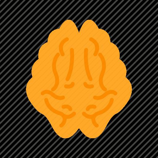 brain, healthcare, human, medical icon