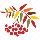 autumn, leaves, nature, plant, rowan, season, tree icon