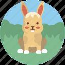 pet, shop, animal, cute