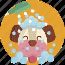 pet, dog, bathing, wash, animal, hygiene