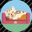 pet, cat, sleep, cute, animal