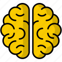 brain, neuro, intelligence, brainstorm, head, organ