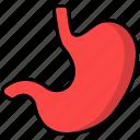 stomach, digest, organ, digestion, gastroenterology, anatomy