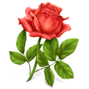 https://cdn4.iconfinder.com/data/icons/Gifts/128/rose.png