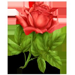 flower, plant, rose icon