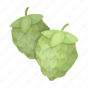 beer, brewing, hops, ingredient, plant, seeds icon