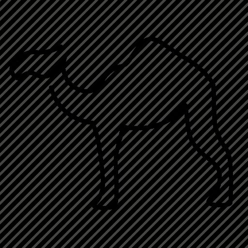 camel, desert, egypt icon