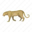 leopard, predator, cat, animal, wild, cheetah