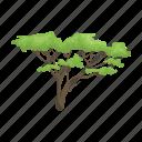 acacia, africa, savannah, tree, vegetation