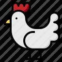 and, animals, bird, chicken, farm, farming, gardening