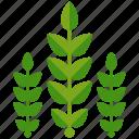 agriculture, crop, crops, farm, farming, leaves