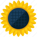 agriculture, flower, nature, sun, sunflower icon