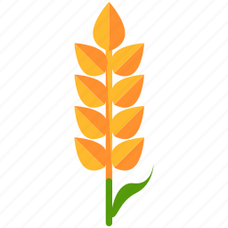 agriculture, crop, grow, nature, wheat icon