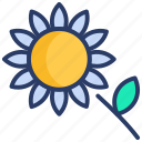 bees, farm, flower, garden, nature, seed, sunflower