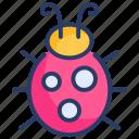 beetle, bug, bugs, insect, lady, ladybug