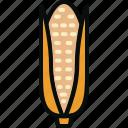 cob, corn, food, maize, plant, pop, vegetable