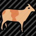 animal, farm, lamb, meat, mutton, oveja, sheep