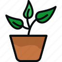 flower, gardening, grow, leaf, nature, plant, pot