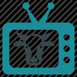 cow, journalist, movie, news, show, television, tv icon