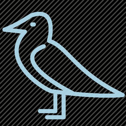 ahoy, animal, bird, marine, mew, sea, seagull icon