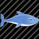 blue, wild, shark