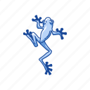amphibian, animal, carnivorous, frog, toad, tree frog