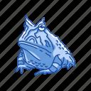 amphibian, animal, frog, horned frog, toad, vertebrates