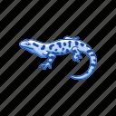 amphibian, animal, lizard, mole salamander, salamander, tiger salamander