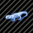 amphibians, animal, lizard, northwestern salamander, salamander, vertebrates icon