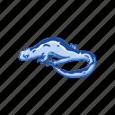 amphibian, animal, gracile, long-toed salamander, salamander, vertebrates