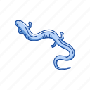 amphibians, animal, flatwood salamander, frosted salamander, salamander, vertebrates icon