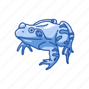 american toad, amphibians, animal, carnivorous, frog, toad