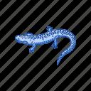 amphibians, animal, flatwood salamander, salamander, vertebrates icon