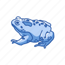 american toad, amphibians, animal, frog, toad