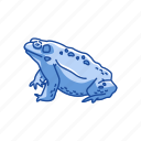 american frog, amphibians, animal, carnivorous, frog, toad, vertebrate