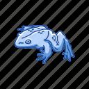 amphibian, animal, frog, goliath frog, toad, vertebrates