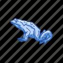 amphibian, animal, frog, goliath frog, toad, vertebrate