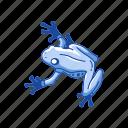 animal, carnivorous, frog, toad, tree frog, vertebrates icon