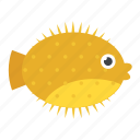 cartoon fish, mammal, pet animal, sea life, tropical fish icon