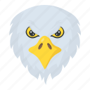 angry bird, eagle face, falcon, hawk, wildlife icon