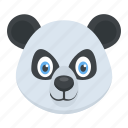 animal, panda face, polar bear, wildlife, zoo