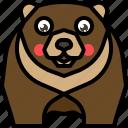 animal, bear, grizzly, mammal, wild, wildlife