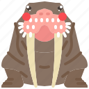 animal, arctic, mammal, ocean, seal, walrus