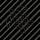 sea turtle, tortoise, turtle, ocean