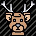 deer, antler, stag, hoof, wildlife