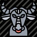 buffalo, bison, cattle, bovidae, mammal