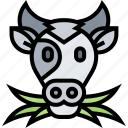 cow, cattle, livestock, dairy, production