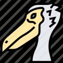 pelican, beak, bird, waterfowl, wildlife